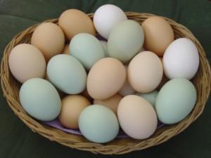 Eggs-1